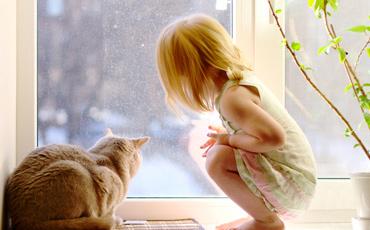 if-barn-katt